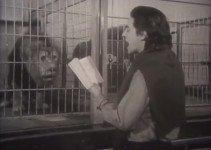 Poet Michael McClure reading to lions in the zoo